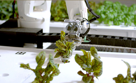 Robot-grown greens are on sale