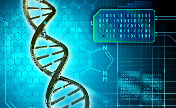 Computer algorithm predicts the growth of human DNA