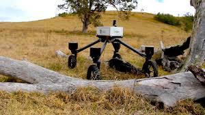 Robot-çoban ixtira edilib