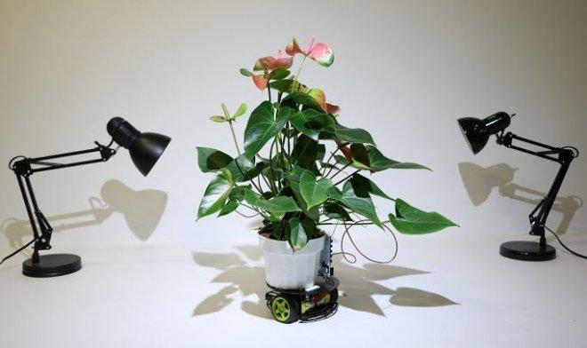 Elowan - symbiotic robot for growing ideal plants