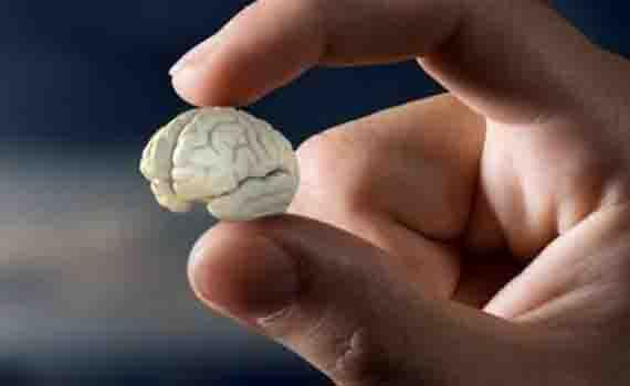 """Robotlar üçün mini """"beyin"""" yaradılıb"""